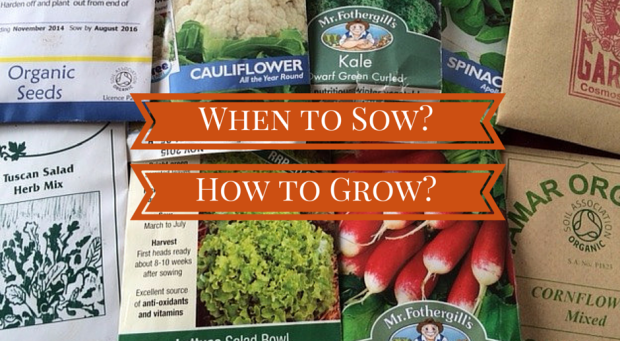 When to sow and how to give your plants the best start.