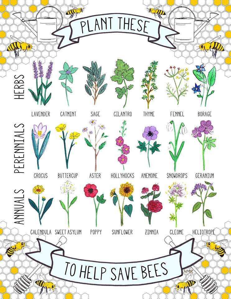 Save-The-Bees-By-Planting-The-Flowers-Plants-They-Love